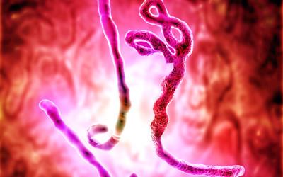 Chinese Coronavirus — A View from America's Southwest